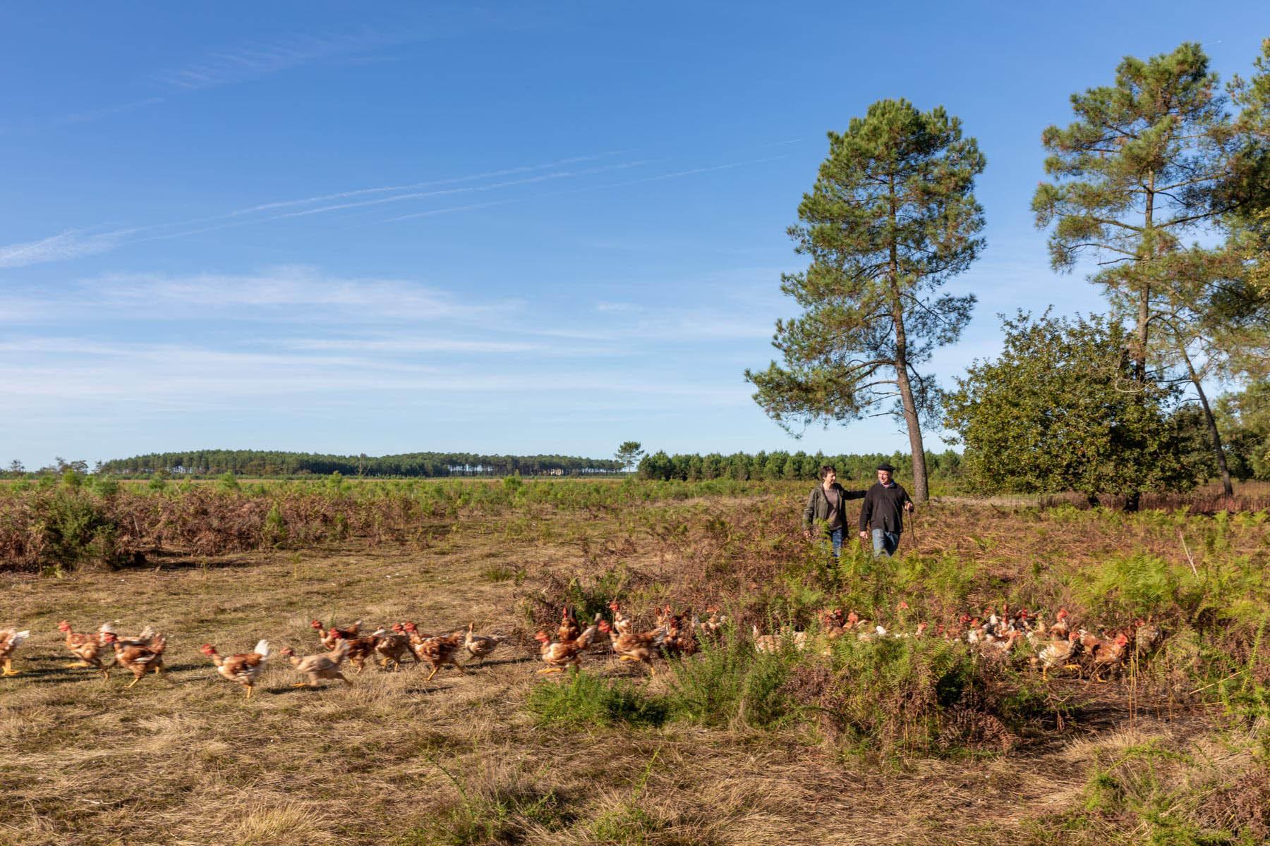 photo d'un paysage des landes avec un agriculteur et ses poulets par Carole photographe