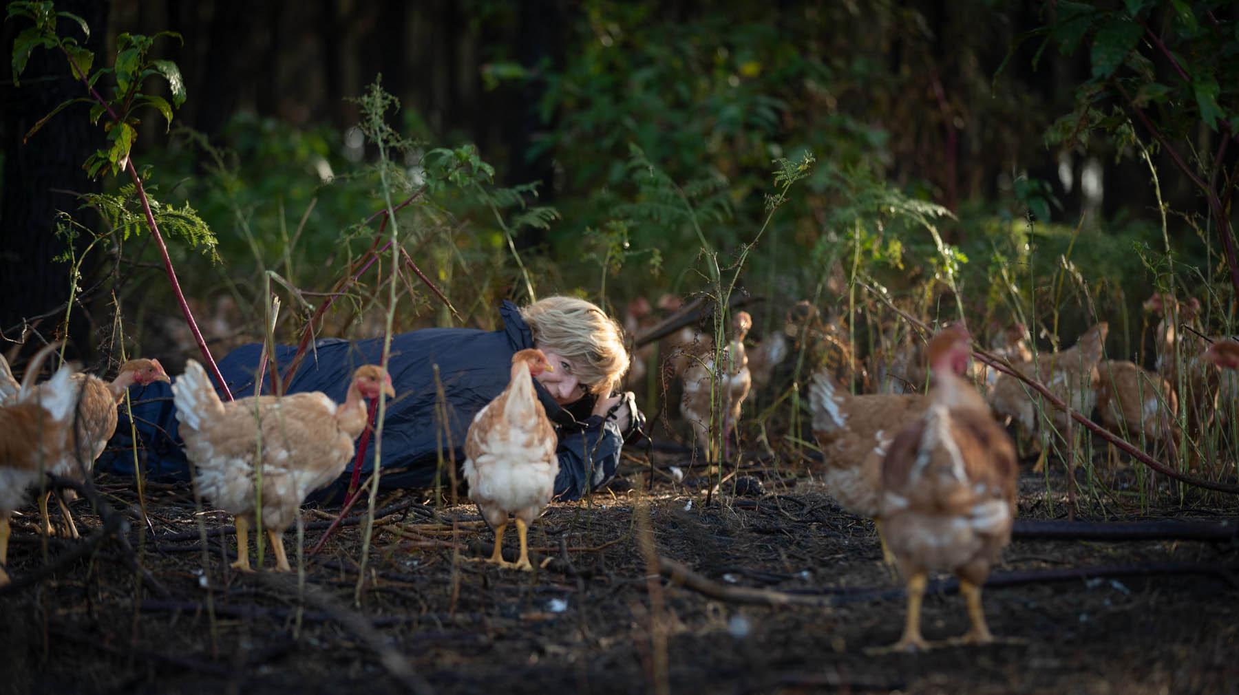 photo de Carole embid allongée au milieu des poules dans une ferme des landes